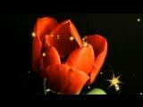 Цветы распускаются и Мамикон ft. A-Sen - Как же ты красива