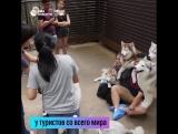 Кафе с собаками в Бангкоке