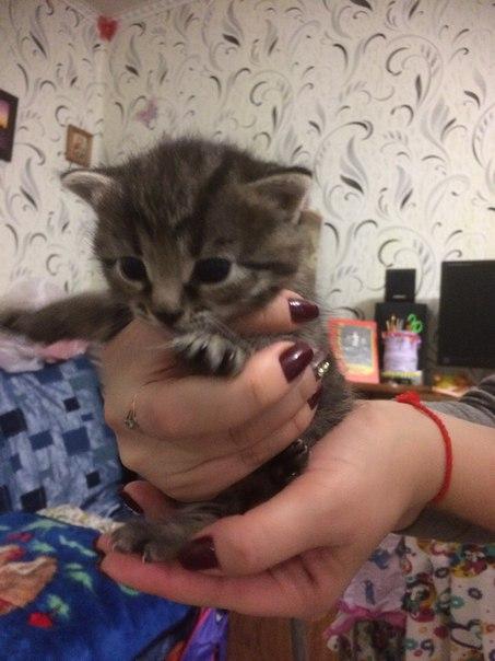 Замечательные котята(мальчики) срочно ищут хозяев 89511421626