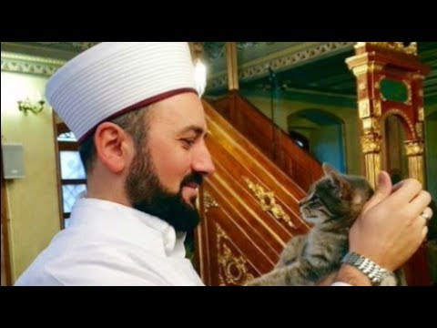 Котики и ислам