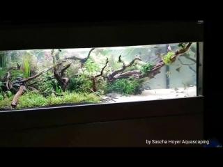 Good_Night_Bar_Counter_Aquarium_120x60x40cm_Sascha_Hoyer_Aquascaping.mp4
