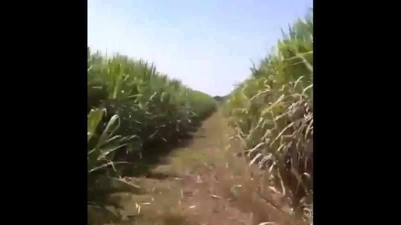 Конная прогулка 3