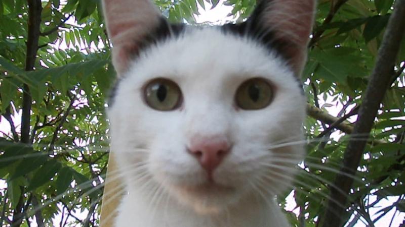 Кот Семён заступает на боевой пост.