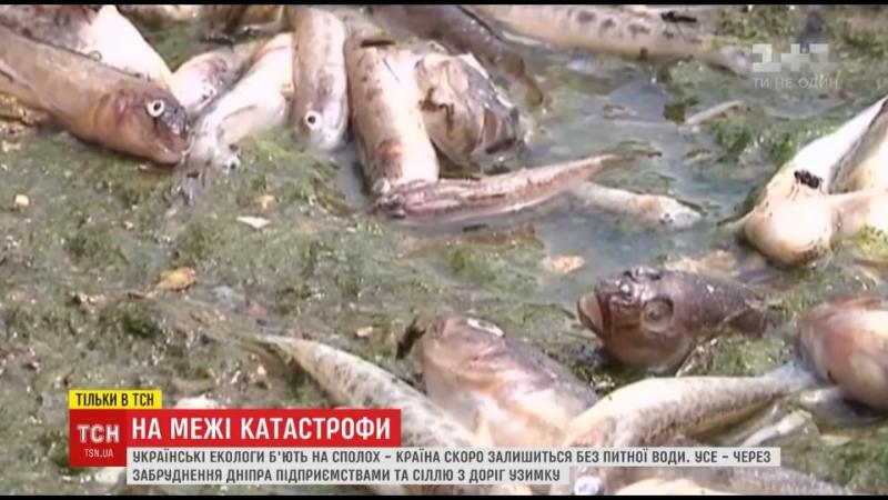 Наближення катастрофи : екологи заявили про критичне забруднення Дніпра