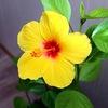ЦВЕТОМАНИЯ | Комнатные цветы и растения