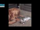 Приколы с котами смешные коты смешные кошки приколы коты приколы про кошек про котов с кошками кот.mp4