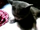 Кошка-Бандитка королевствует в нашей люле!