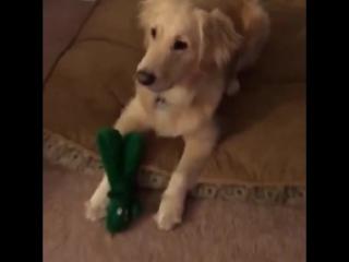 Парень сделал живую копию любимой игрушки своего пса