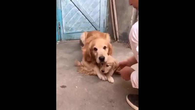 Любищая мама