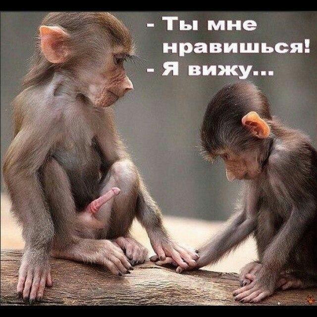 Евгений Барс   Москва