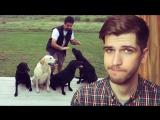 Музыкальные собаки и бразильские бандиты