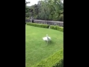 Красавец альбинос)