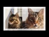 Короче говоря, мысли кота. #RoomFactoryBattle
