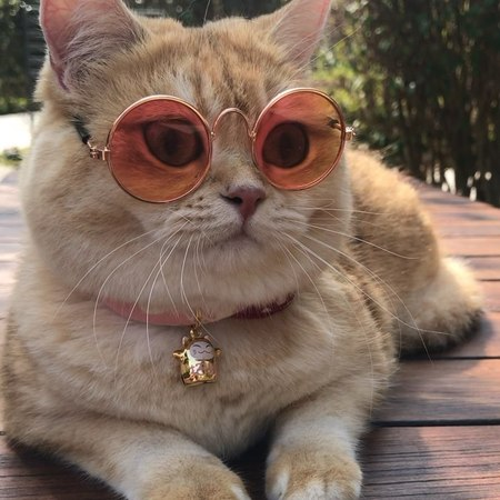 "Molly Nudee❤️️😸😸 on Instagram: ""Hipster mollymollymollymonkeycat cats catsofinstagram cats_of_instagram catsagram catslover catslover ca..."