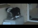 Кошка пропала на две недели, а потом нашлась. Такой была реакция собаки на её возвращение.
