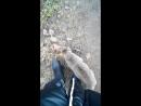 Мы с котом на прогулке
