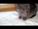 Подвальный котенок Тишка