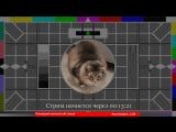 Destiny 2 и игровой монстр Infnite X. Розыгрыш игровой гарнитуры для зрителей!