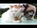 Кот, дзен и бесстрашная улитка.