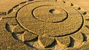Crop circles 2014 Macmillan Way near Rodmarton, Gloucestershire, UK 15 July 2014