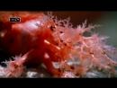 Водные ангелы или исчадия ада - Рыба фугу, Морской огурец
