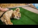 Когда запретят контактные зоопарки