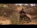 Львы Африки. Дикие животные. Мир природы. Документальный фильм