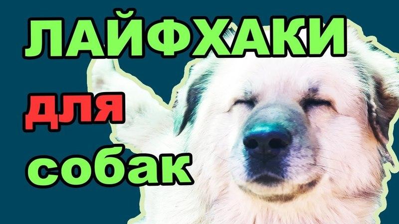 лайфхаки и полезные советы для собак, которые живут за городом
