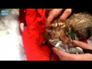 Кот был обнаружен без дыхания во время пожара в Гольяново. Был реанимирован спасателями.