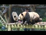 Вот как борются с летними жарой и зноем обитатели Чунцинского зоопарка!