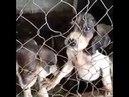 Resgate dos Animais Maus Tratos em Matozinhos MG 6 AcheiC