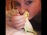 Говорящий попугай. Корелла