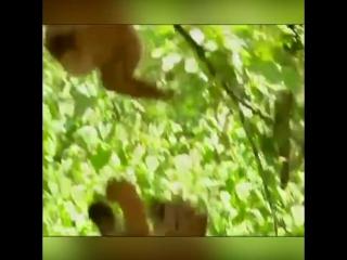 Daily positive - crazy gibbon bored 🤨🐵😀
