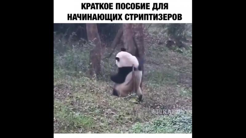 Стрип))