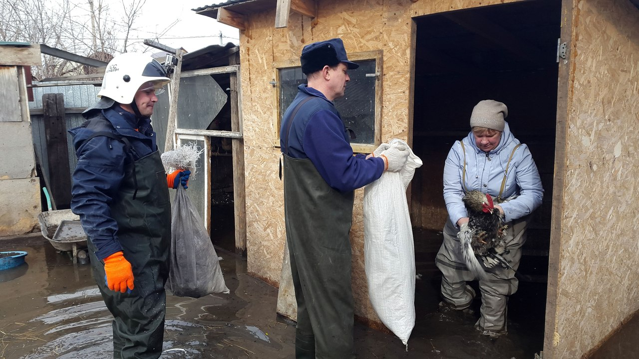 В Оренбурге спасатели эвакуировали кур с затопленного дачного участка в СНТ «Садовод»