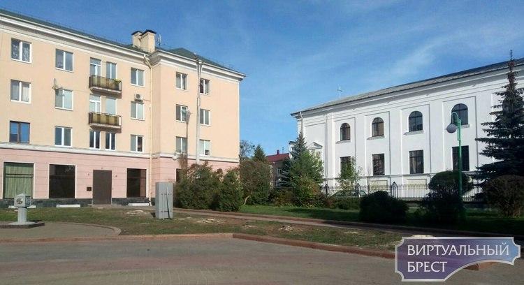 Началась вырубка старых елей на площади Ленина в Бресте
