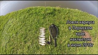 Ловля хариуса нахлыстом в июне 2018 года в Пермском крае.