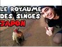 LE ROYAUME SECRET DES SINGES DE KYOTO ! VLOG JAPON