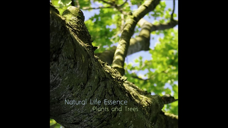 Natural life essence - Roots and minerals (Part 2.)