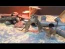 Драка сурикатов - Мадагаскар