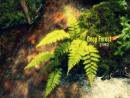 Deep Forest Full Album 1992 The First Album