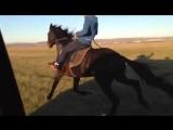 Ногай ат | Ногайская лошадь