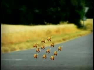 Вот как на самом деле пчелы собирают мед =))