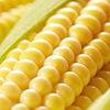 < Золотой початок> семена кукурузы