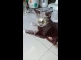 Кот, это точно мука была