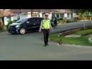 Полиция переводит кота через дорогу!