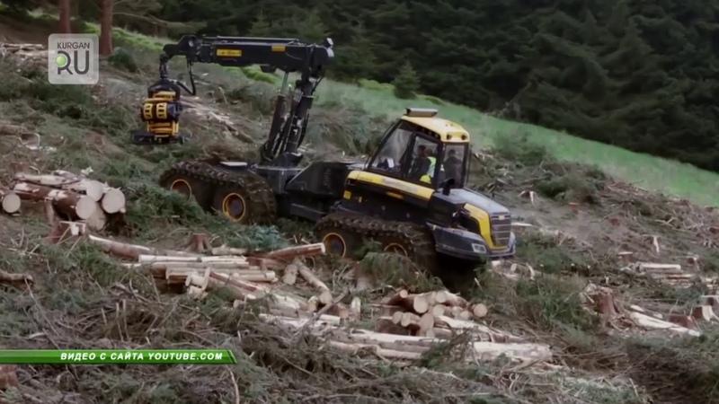 Директор уволен, начальники наказаны: на территории памятника природы вырублен лес на 7 млн. рублей