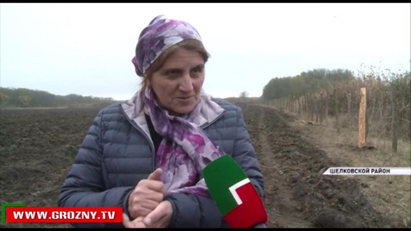 Более 8000 тысяч саженцев акации высадили в Шелковском районе
