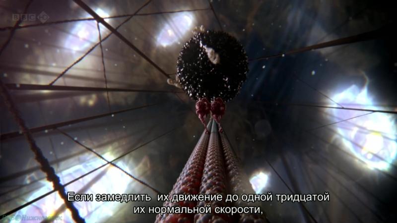 BBC «Внутренняя Вселенная: Тайная жизнь клетки» (Научно-познавательный, исследования, 2012)