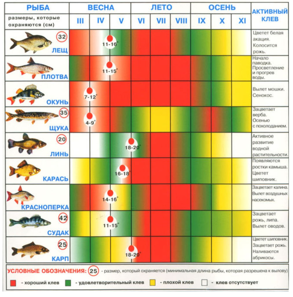 Выберите рыбу елец ёрш карась карп/сазан красноперка лещ линь налим окунь пескарь плотва судак уклейка щука язь.